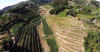 Um voo panorâmico pelo Douro permite apreciar as melhores paisagens